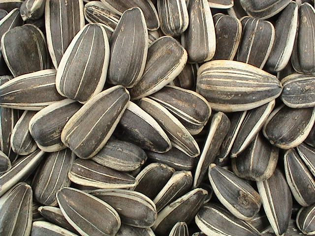 Sunflower Seed Only Foods