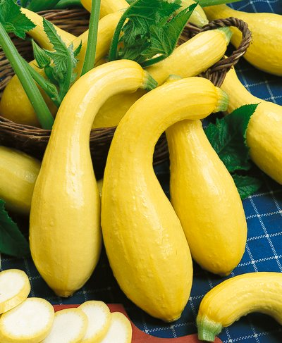 Crookneck Squash Nutritional Facts How to Cook Recipes