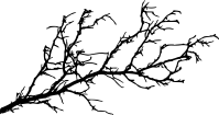 15 Tree Branch Silhouettes (PNG Transparent) | OnlyGFX.com