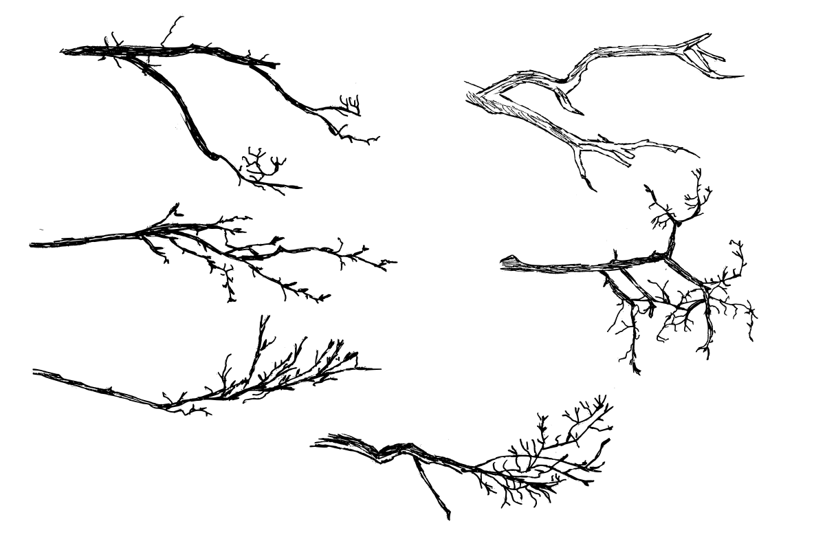 6 Tree Branch Drawing Transparent