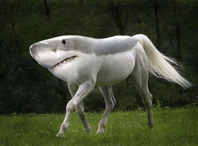 morphed animals1