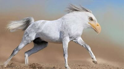 morphed animals3