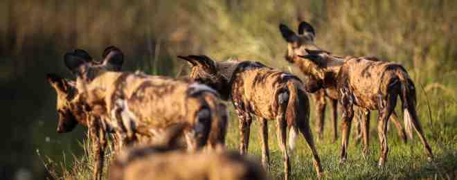 Botswana_2012_1369 copy