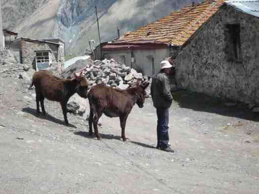 Bustling metropolis of Kazbeg