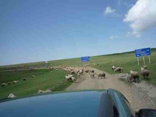 Traffic jam en route to Davit Gareja