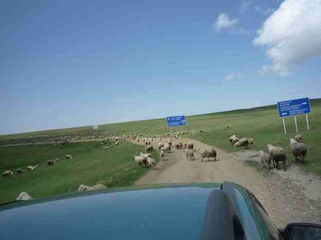 Traffic jam en route to Davit Gareja