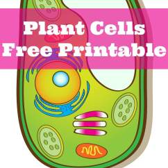 Plant Cell Diagram Only Split Ac Wiring Lg Learning About Cells Free Printable