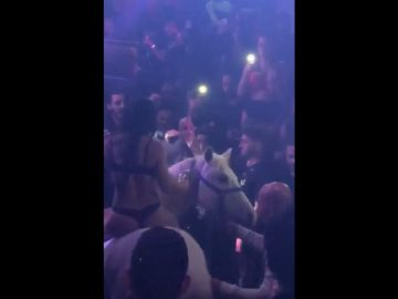 Someone Brought a Horse into a Club