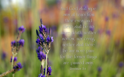 Country Love Quotes Wallpaper Isaiah 40 31 Free Nature Amp Bible Desktop Background