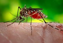 Zika Virus Symptoms, Treatment, Prevention