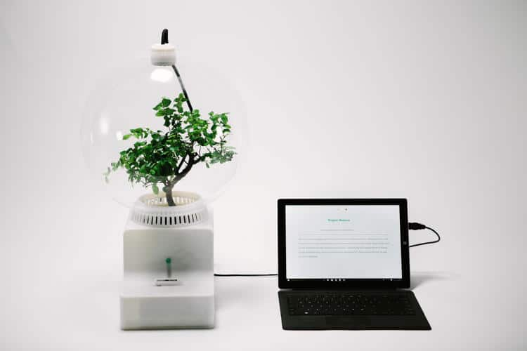 3060347-slide-s-1-microsoft-teaches-plants-to-talk-with-project-florence