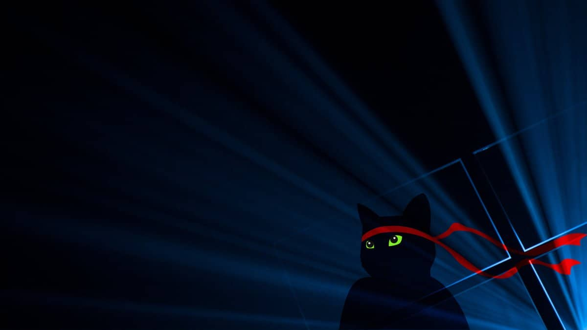 NinjaCat Featured
