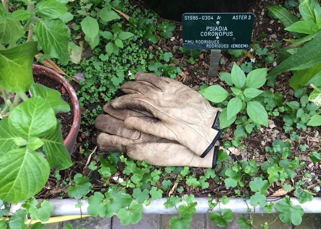 Gloves at the Botanical Garden