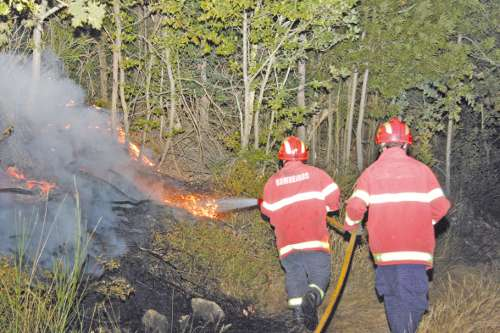 Incêndios destroem florestas trofenses