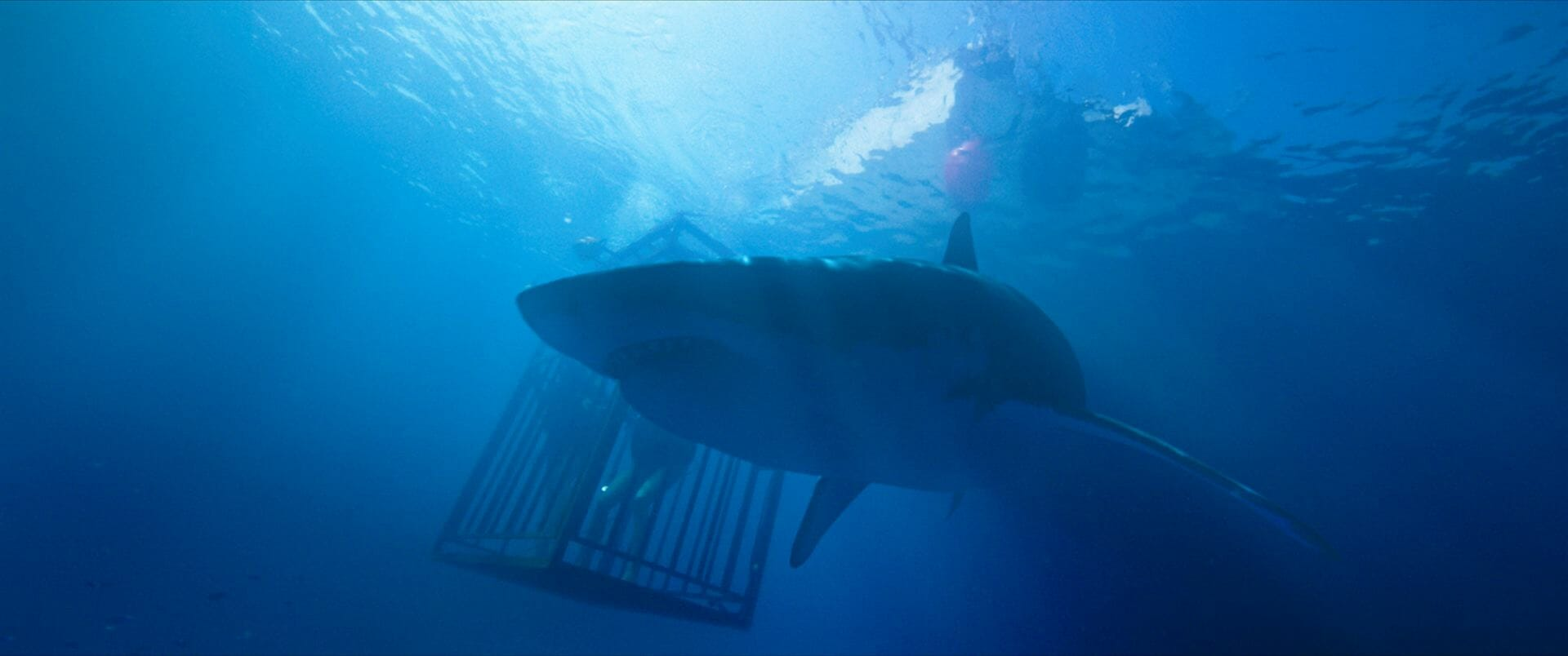 Critique 47 Meters Down On Rembobine