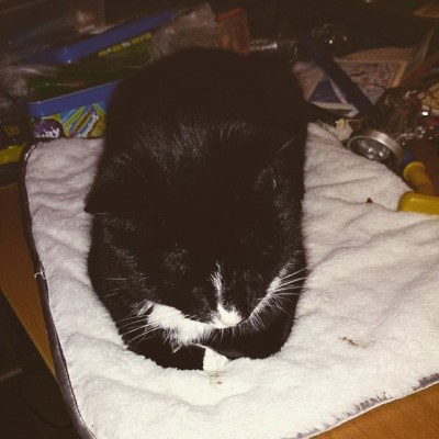 #takingcare100. Finally got a cat that is,staying on his mat while on PC playing.