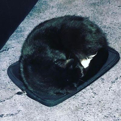I wandered where my laptop slipcase was. Apparently it is now a cat bed ....