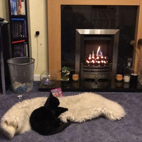 Fire bathing cat ...