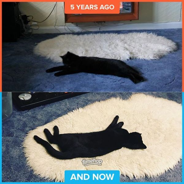 5 years ago we said a final goodbye to Ricki. Just under a year ago we said hello to Lily. We are convinced they are related somehow....