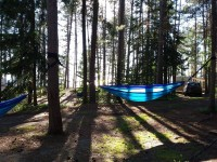 Pine trees, Agawa Bay campground, Lake superior provincial park