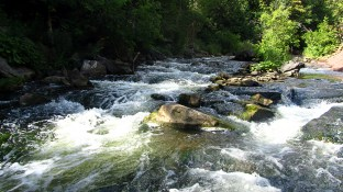 Rapids on the upper Credit River.