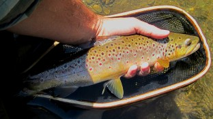 Mid-day Credit River brown.