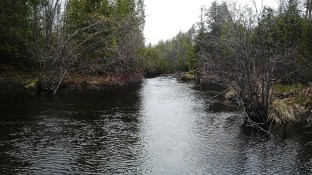 Another small southern Ontario stream.