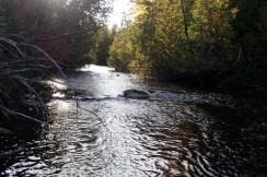 Small, quiet Brookie water.