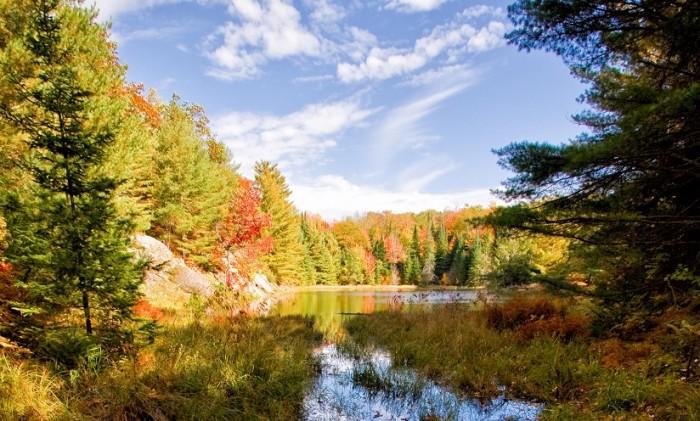 Fall Foliage Hd Wallpaper Fall Colours At Algonquin Provincial Park