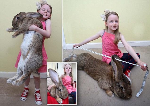 اضخم ارنب