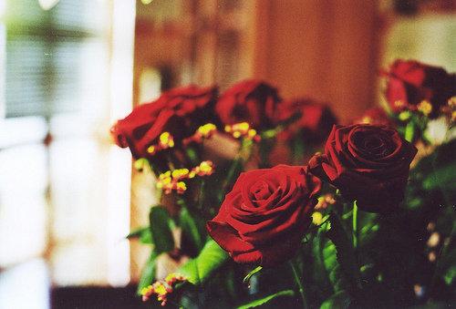 شالات صيفية بتصاميم الورود الجورية