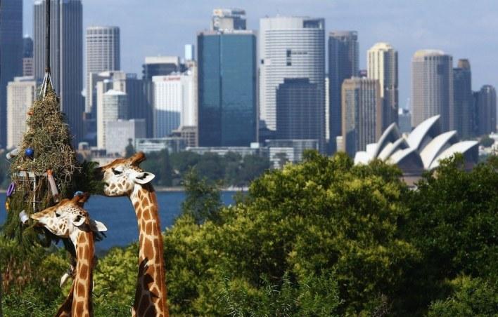 صور مبهرة من سيدني الأسترالية !  (19)