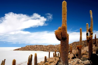 Isla de los Pescados, meaning Fish Island, is an island of fossilised coral covered with ancient cacti. The towering cactus creates long shadows across the shining white landscape and occasionally bloom, the white and purple flowers adding a dash of colour to the area. Photo credit: brspled