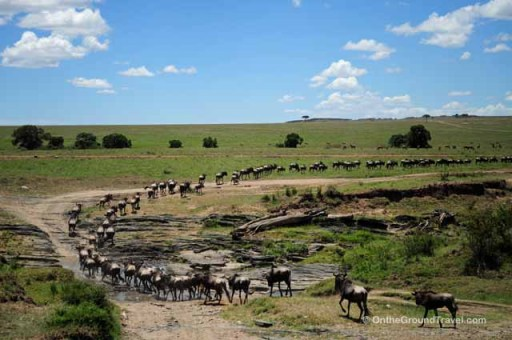 African Safari - Wildebeests Crossing Mara River in Kenya