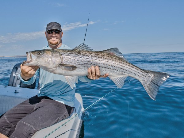 Striper Migration Map 3 2019 Water - Year of Clean Water