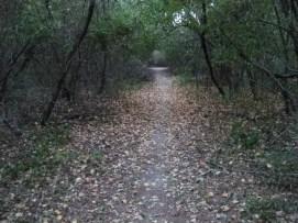 Edgewood Preserve