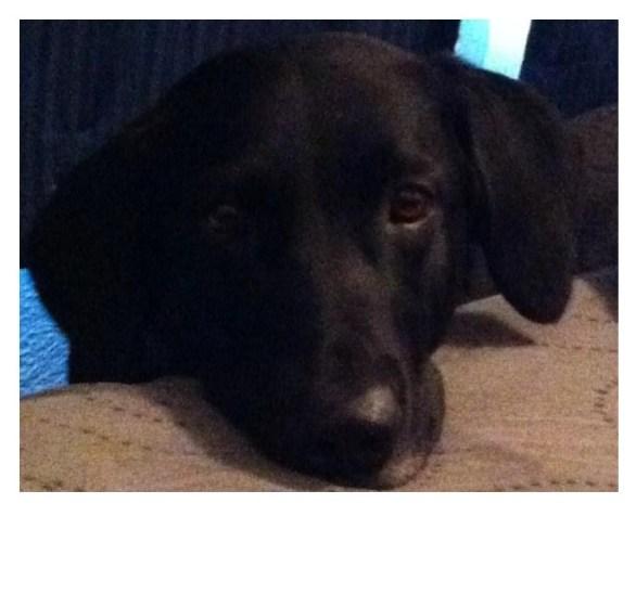 Meet Moby!
