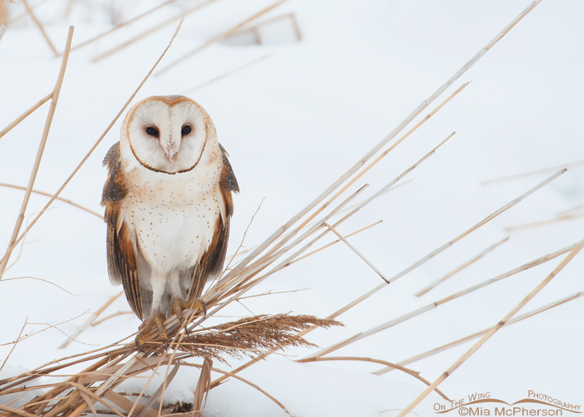 Image result for white barn owl in a tree pictures