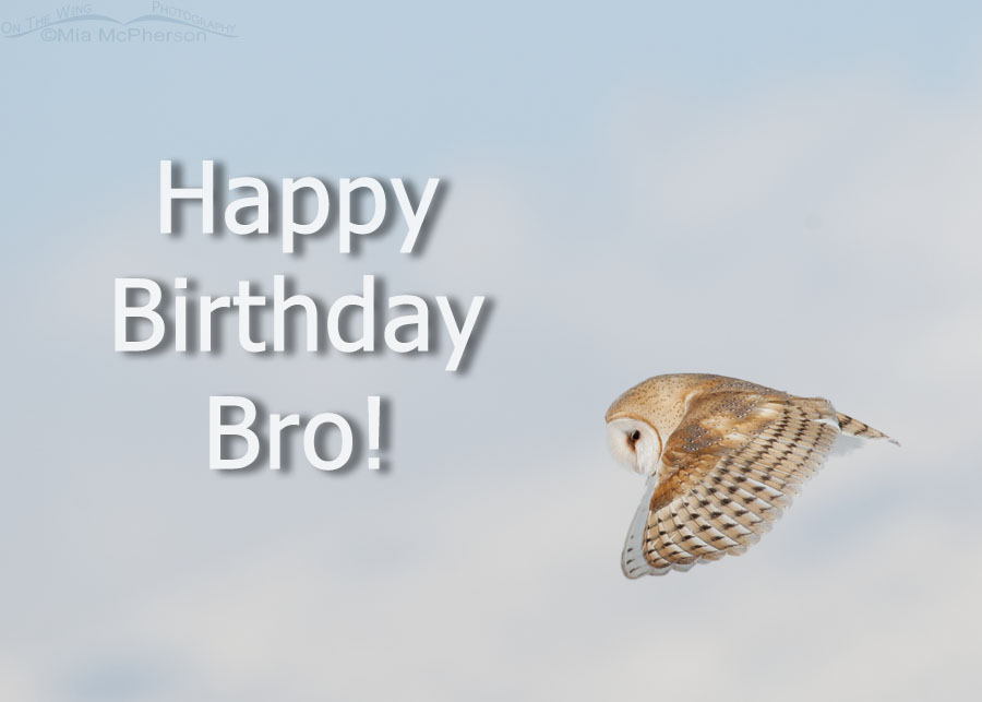 Peachy Happy Birthday Little Brother On The Wing Photography Personalised Birthday Cards Bromeletsinfo
