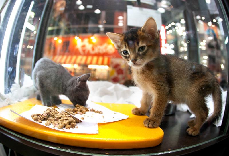 Shibuya Tokyo Cat photo ooaworld