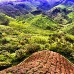 Cameron Highlands Instagram Photo