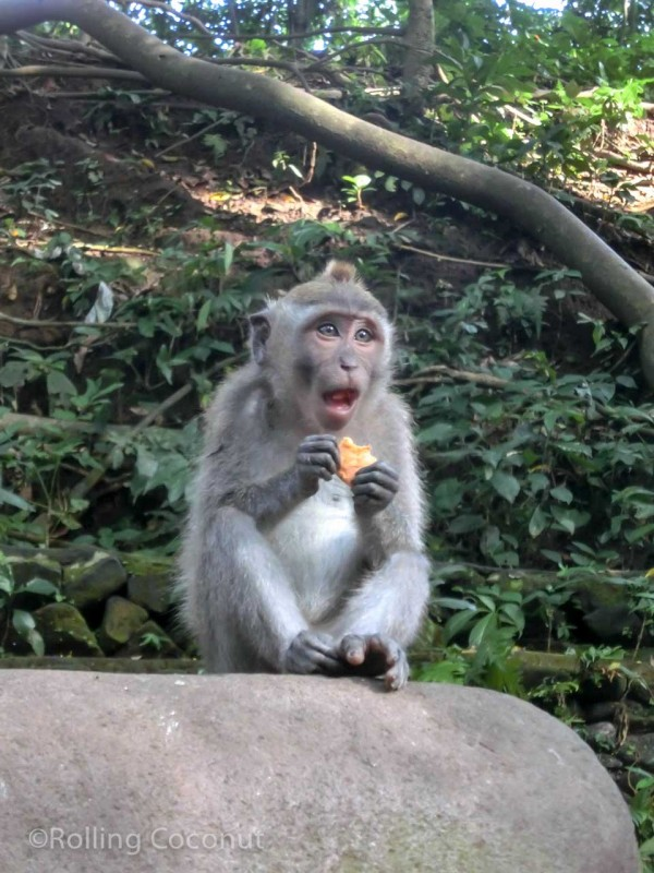 Cookie Monkey Forest Ubud Bali Indonesia photo Ooaworld