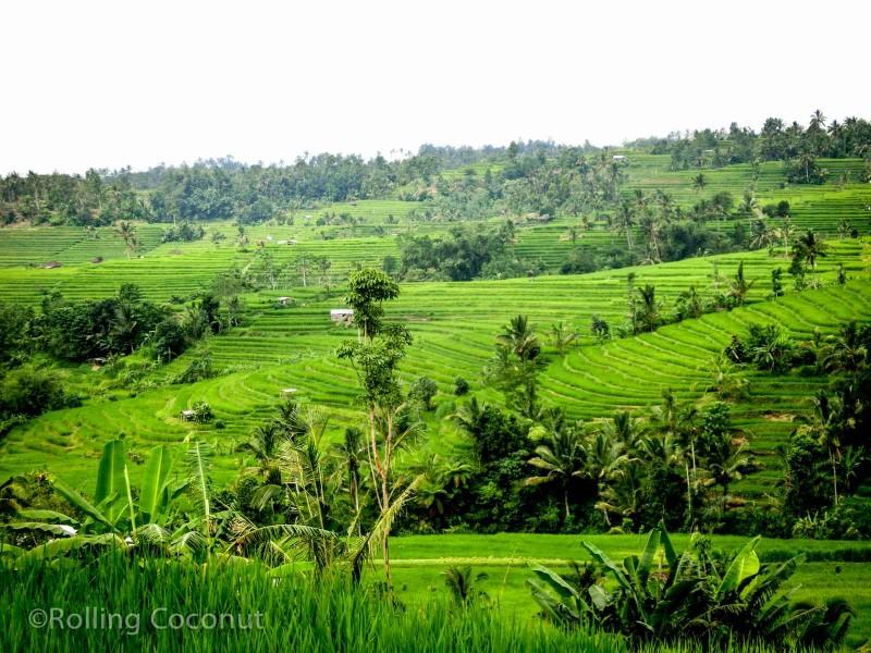 Jatiluwih Rice Terraces Bali Indonesia photo Ooaworld