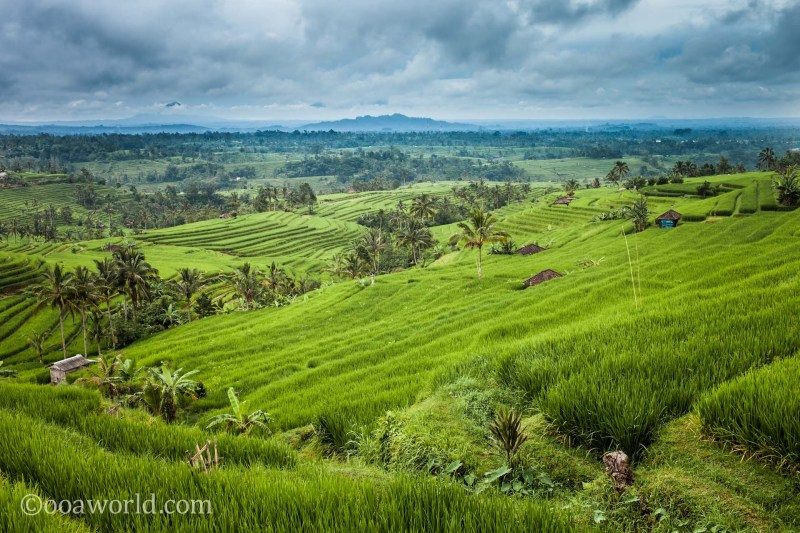 Jatiluwih Rice Terraces photo Ooaworld