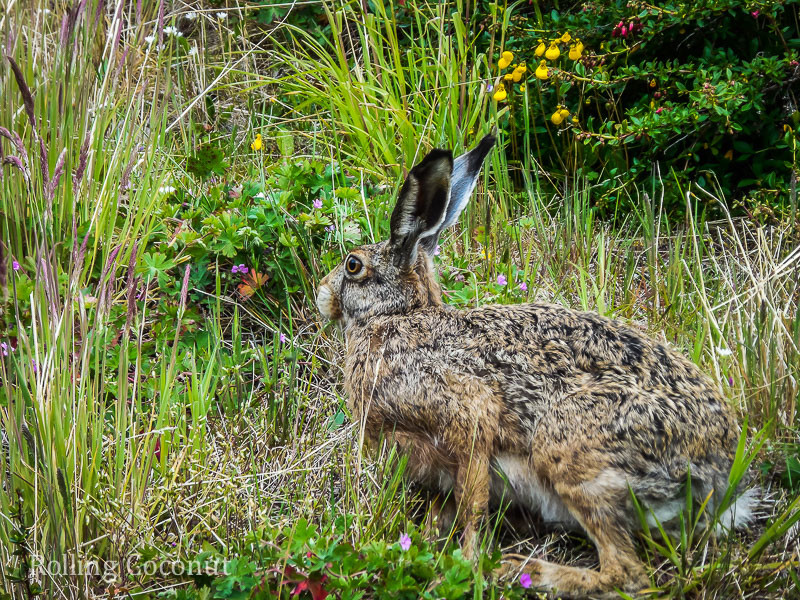 Torres del Paine Chile A Greeting Hare Rolling Coconut OOAworld Photo Ooaworld