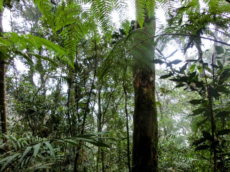 Forest Mount Kinabalu Borneo photo ooaworld Rolling Coconut