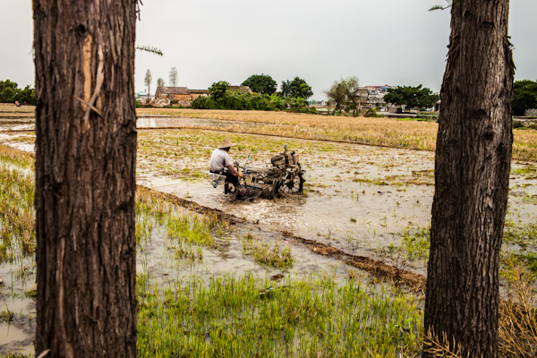 rice fields kaiping china photo ooaworld Rolling Coconut