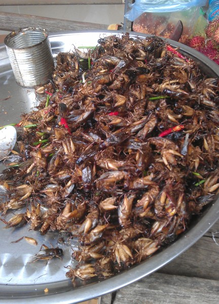 fried insects cambodia photo ooaworld Rolling Coconut