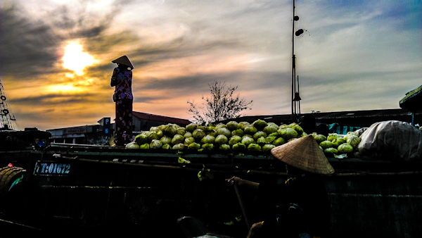 cai rang watermelons vietnam photo ooaworld Rolling Coconut