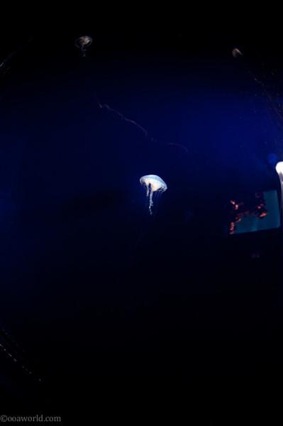 Jellyfish (aquarium)